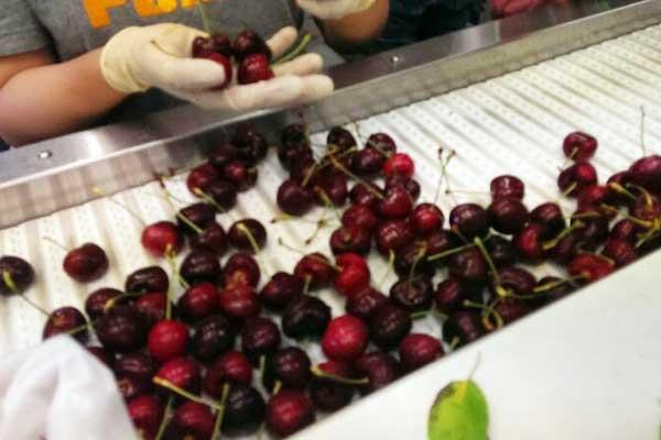 俄罗斯冷冻水果和蔬菜有市场_no.276